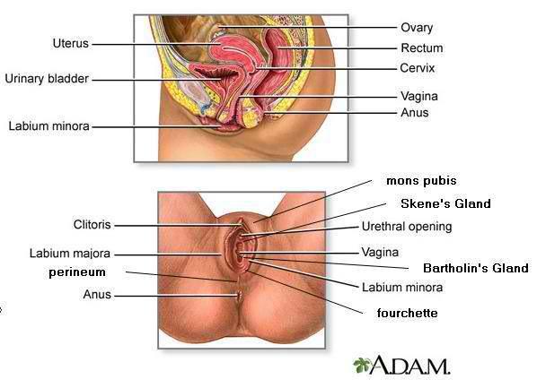 Sexual Reproductive Organs 113