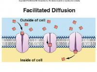 FacilitatedDiffusion 1